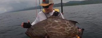 world-record-broomtail-grouper